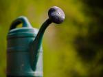 Gartenarbeit für privat gesucht? Was ist zu beachten?